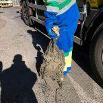 Ayuntamiento de Novelda 2-2-150x150 Ayuntamiento y Aqualia inician una campaña contra el vertido de toallitas al alcantarillado