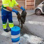 Ayuntamiento de Novelda 4-1-150x150 Ayuntamiento y Aqualia inician una campaña contra el vertido de toallitas al alcantarillado