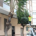 Ayuntamiento de Novelda ayto-4-1-150x150 Mantenimiento de Ciudad inicia la campaña anual de poda