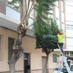 Ayuntamiento de Novelda ayto-4-1-150x150 Manteniment de Ciutat inicia la campanya anual de poda