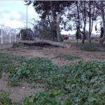 Ayuntamiento de Novelda ayto-viento-11-150x150 Las rachas de viento dejan algunas secuelas en Novelda