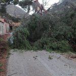 Ayuntamiento de Novelda ayto-viento-12-150x150 Las rachas de viento dejan algunas secuelas en Novelda