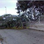 Ayuntamiento de Novelda ayto-viento-9-150x150 Las rachas de viento dejan algunas secuelas en Novelda