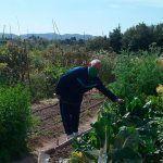Ayuntamiento de Novelda b-150x150 Es reobrin  les instal·lacions dels Horts Ecològics