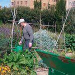 Ayuntamiento de Novelda c-150x150 Es reobrin  les instal·lacions dels Horts Ecològics