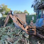 Ayuntamiento de Novelda 02-19-150x150 Medio Ambiente retira más de 10 toneladas de cactus Cylindropuntia del cauce del río