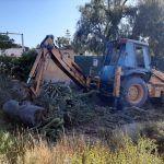 Ayuntamiento de Novelda 03-14-150x150 Medio Ambiente retira más de 10 toneladas de cactus Cylindropuntia del cauce del río