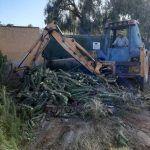 Ayuntamiento de Novelda 04-8-150x150 Medio Ambiente retira más de 10 toneladas de cactus Cylindropuntia del cauce del río