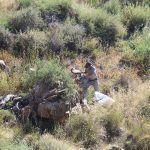Ayuntamiento de Novelda 03-8-150x150 Medio Ambiente inicia la limpieza de chumberas de la ladera del cerro de La Mola