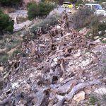 Ayuntamiento de Novelda 06-3-150x150 Medio Ambiente inicia la limpieza de chumberas de la ladera del cerro de La Mola