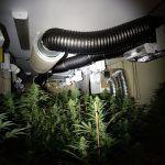 Ayuntamiento de Novelda WhatsApp-Image-2020-12-28-at-08.41.42-2-150x150 Policía Local localiza una importante plantación de marihuana en una finca rural