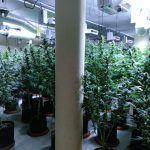 Ayuntamiento de Novelda WhatsApp-Image-2020-12-28-at-08.41.42-3-150x150 Policía Local localiza una importante plantación de marihuana en una finca rural