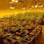 Ayuntamiento de Novelda WhatsApp-Image-2020-12-28-at-08.41.42-5-150x150 Policía Local localiza una importante plantación de marihuana en una finca rural