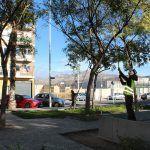 Ayuntamiento de Novelda 03-4-150x150 S'inicia la campanya anual de poda de l'arbratge municipal