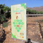 Ayuntamiento de Novelda 05-1-150x150 Novelda apela al consumo de proximidad para potenciar la uva de mesa embolsada
