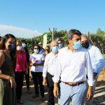 Ayuntamiento de Novelda 08-1-150x150 Novelda apela al consumo de proximidad para potenciar la uva de mesa embolsada